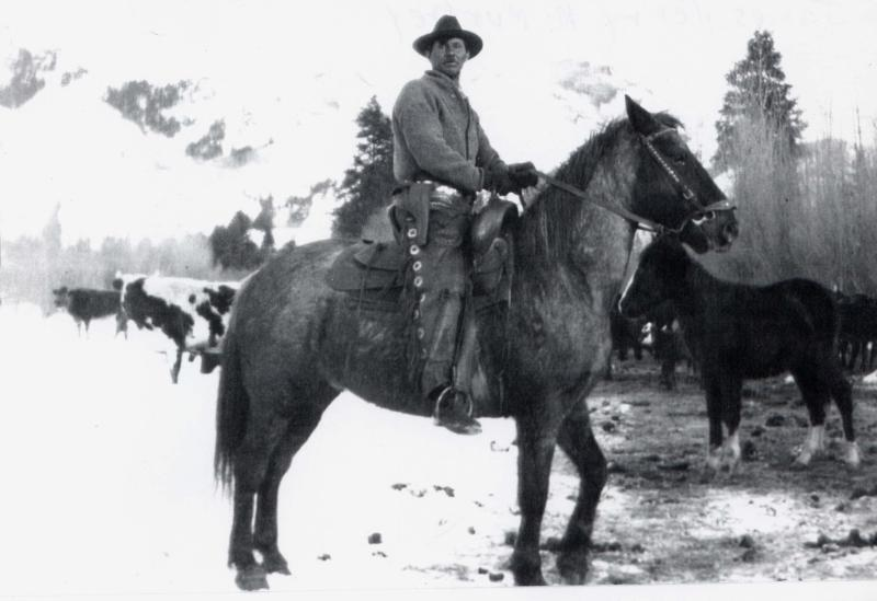 James Henry McMurtrey herding cattle