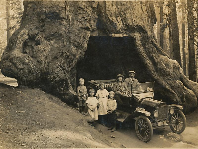 Driving throught he Winowa Tree in the Redwoods, California, United States in 1922.  Children are Paul Herbert Walter, Dorothy Elberta Walter, Bonnie Bessie Walter, and parents Florence Marilla Chamberlain (married name Walter) and Arthur William Walter.